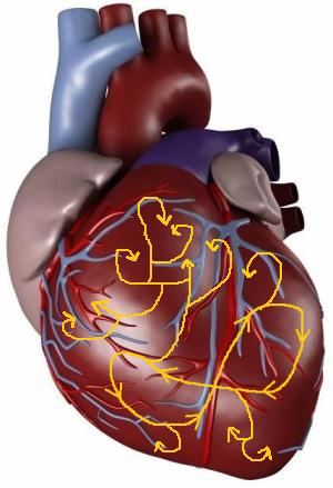 Мелковолновое re-entry в желудочках