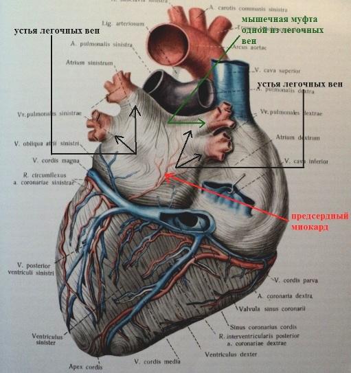 grudnoy-osteohondroz-i-aritmiya