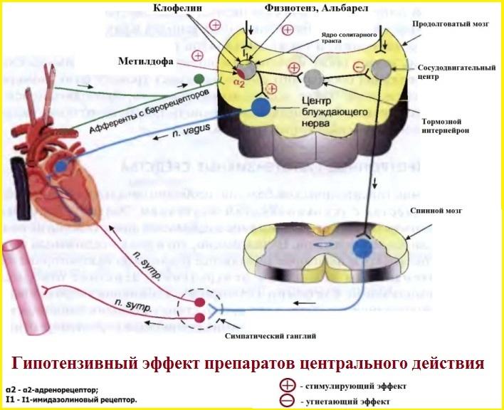 Гипотензивный эффект центральных симпатолитиков