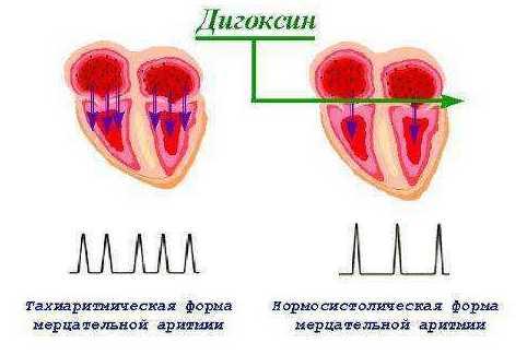 Механизм действия дигоксина