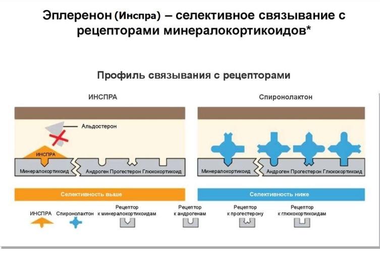 Механизм действия Эплеренона
